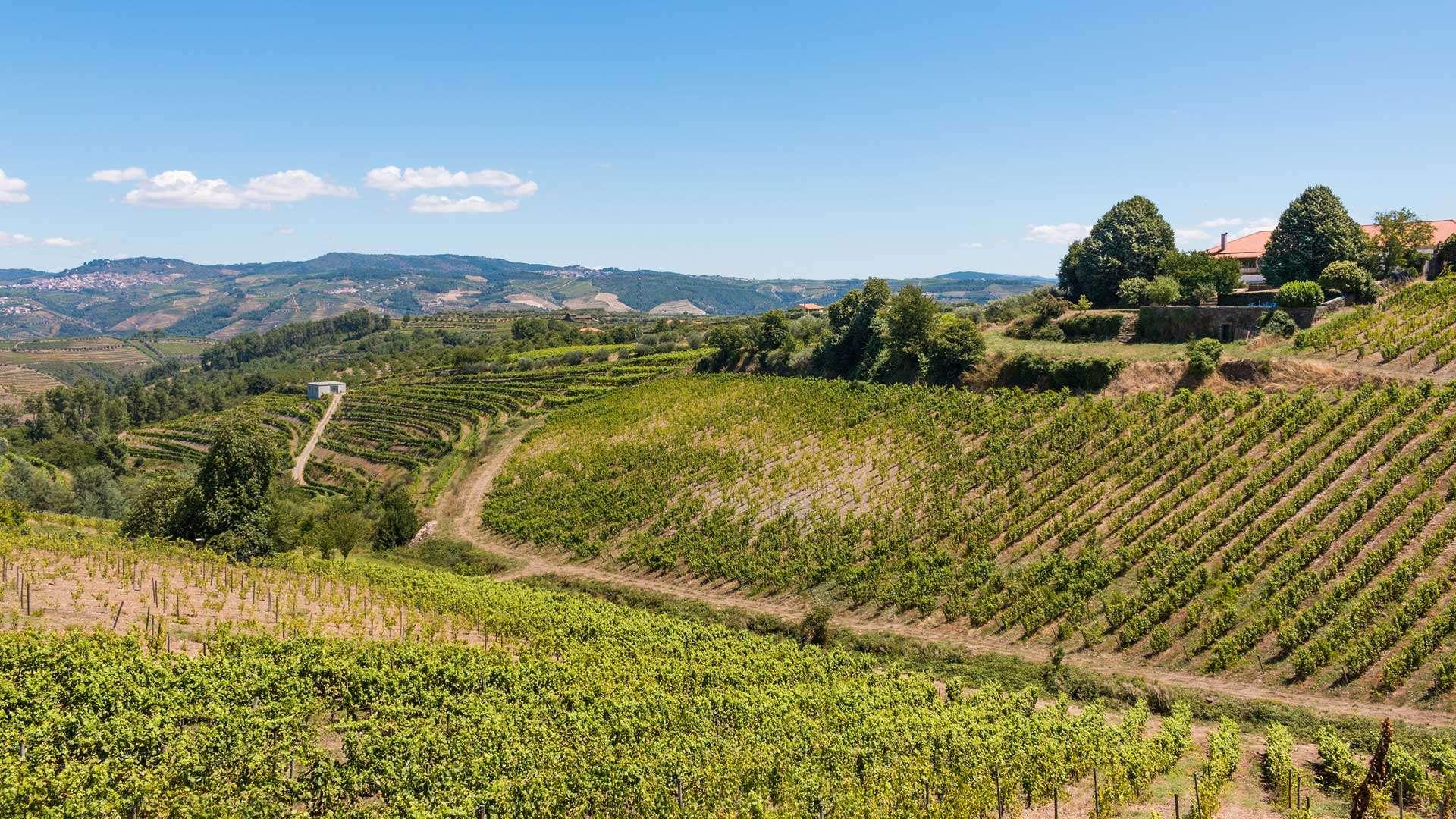 Vin et héritage architectural, découvrez les régions productrices de vins au Portugal en vous logeant dans des manoirs ayant appartenus à la grande bourgeoisie ou à l'aristocratie portugaise.